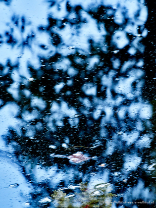 Winter reflection in summer