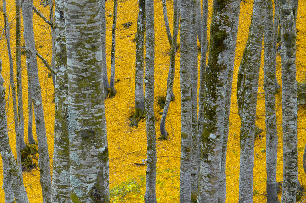 The yellow way