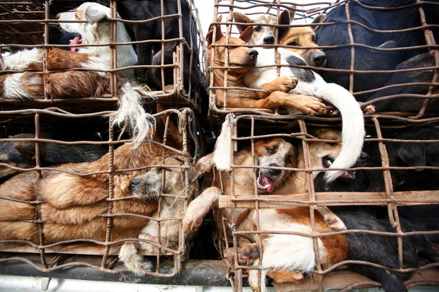Rescued Caged Dogs.