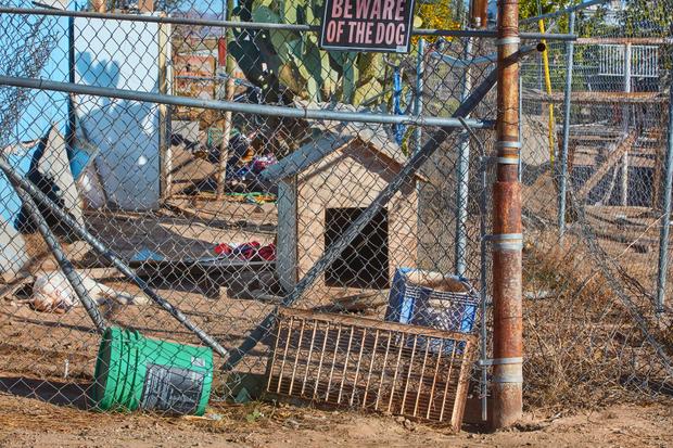 Yard Dog, Sacaton Arizona