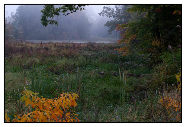 Coon Hallow Preserve 2012b