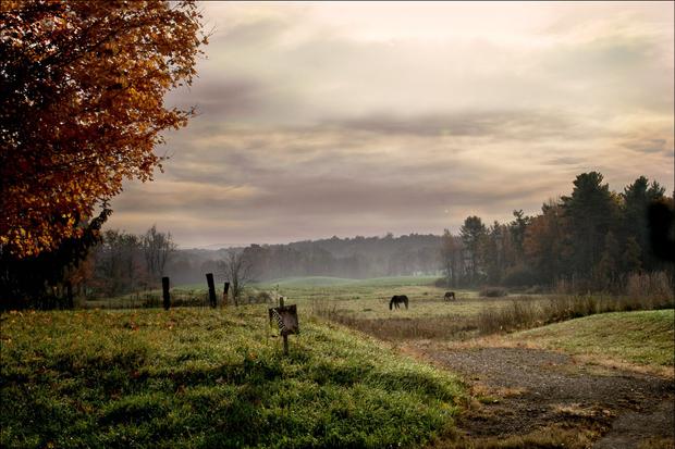 pasturelands-1