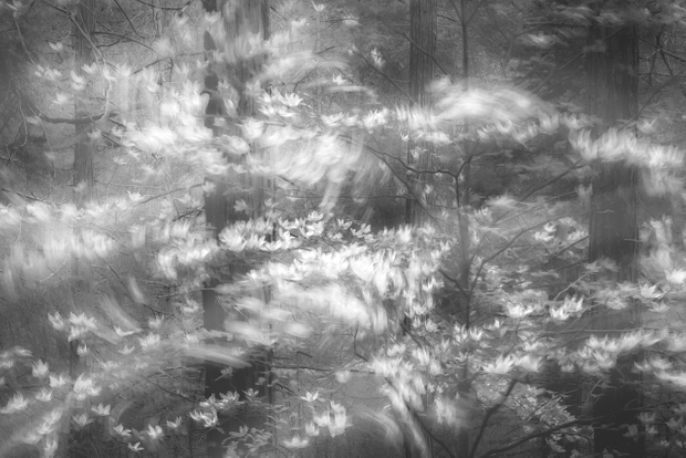 When The Forest Stirs