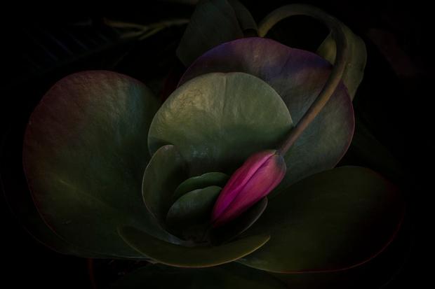 Fiorirai - Blooming Inside
