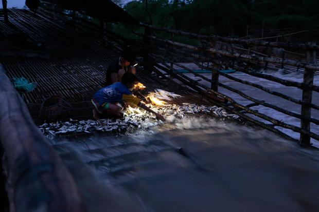夜明、簗(リー)の上で魚を集める少年たち