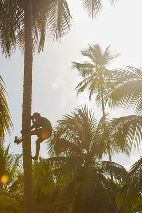 Coconut worker
