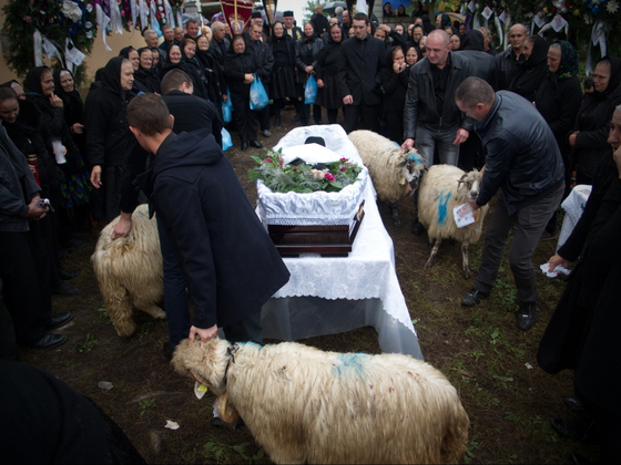 There is an old tradition in Negresti Oas area when a shepherd dies four sheep must go round his coffin four times and later given away for charity to children in need.