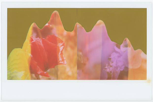 Red Poppy / Ghost Iris digital composite