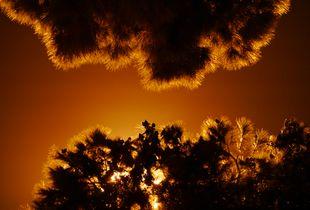 ArtPhoto nature at Night