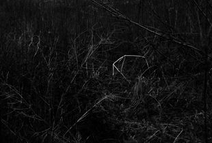 constellations-invasives-01.jpg