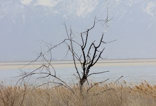 Dead trees, fertile ranch. Antelope Island.