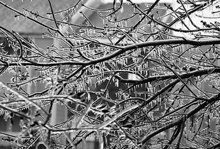 Ice Storm - North Central Texas