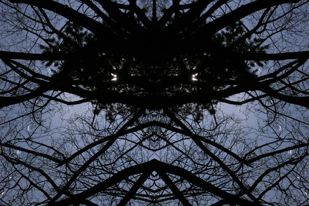 BAUMSPINNE | TREE SPIDER