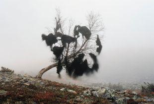 Wind's nest