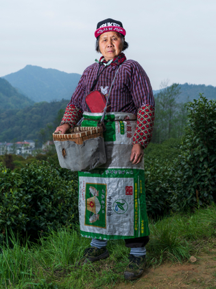 The portrait of the female Chinese tea picker