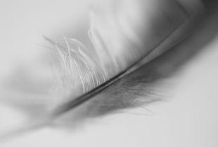 Feathery Dreams