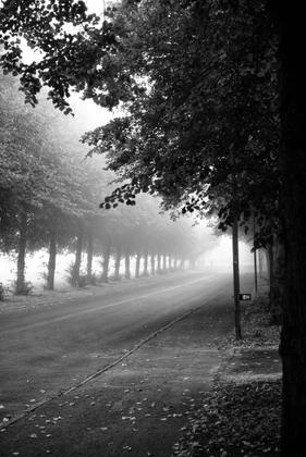 1.  Line of Linden trees