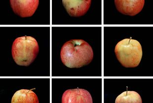 Genetic Traits (Lot 4135), 2003, chromogenic prints, Edition of 3 © Cynthia Greig