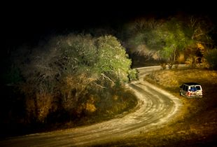Forest Road Curves By Old Van
