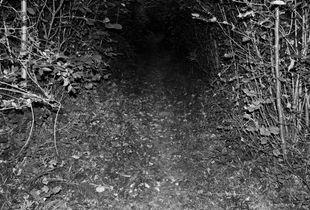 Inner Forest 01