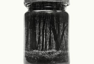 Jarred Wood Anemones
