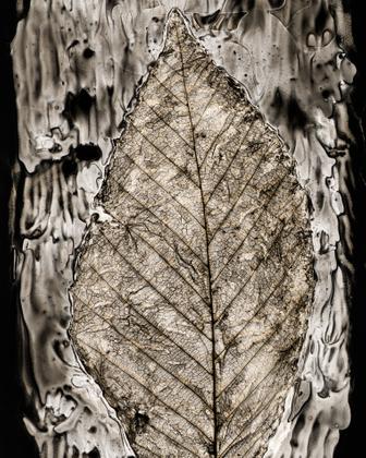 Leaf Cut #26, beech, 2018