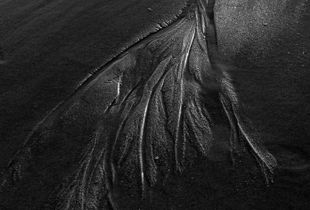 Plum Island Abstract