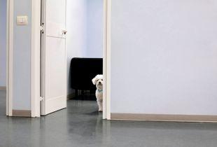 Sophie, 8. Gastrintestinal disorder. Waiting room. © Luigi Avantaggiato