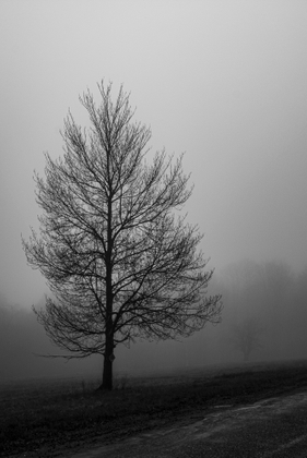 Mountains in the Fog - 01