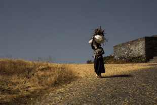The inhabitant of the caldera on her way home.