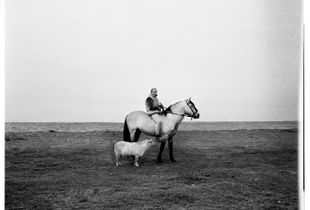 The man, the horse and the sheep