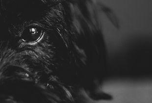 Eyes of Louie