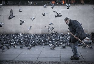 The man and his pigeons II