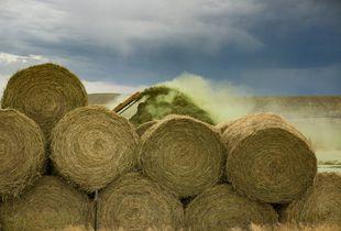 Hay Shredder, Wyoming