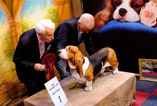Winner (part of series Hundeleben)
