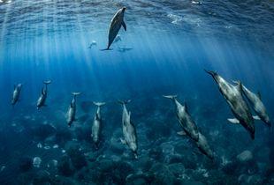 Dolphin of Mikurajima  line dance