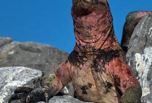 Godzilla at His Lectern