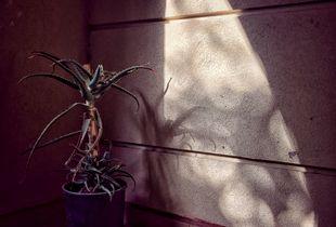 Cactus on the balcony