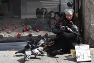 Pigeons in NYC -5'th Avenue