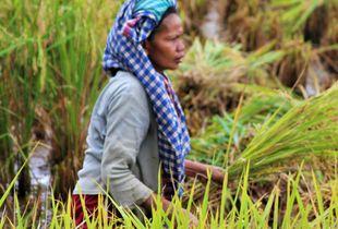 Indonesian peasant