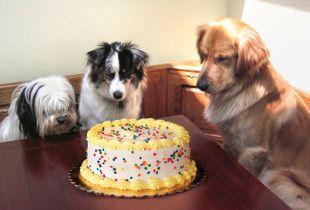 Eyeing the cake