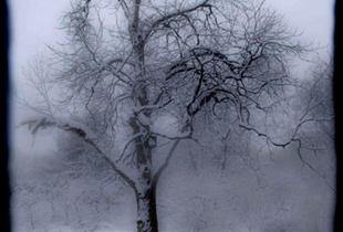 Winter Tree #1