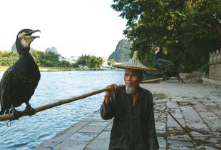 Fisher with cormorant birds
