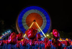 Ferris wheel amongst the tulips