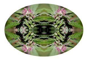 Pharma Flora 01