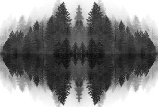 Echoed Pines