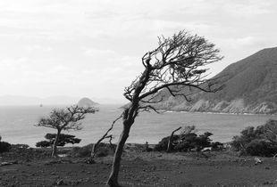 Savannah - tilted trees