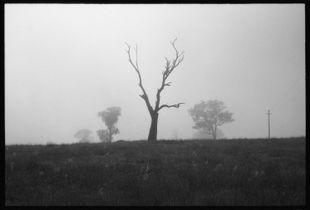 Currawang Morning Mist #1