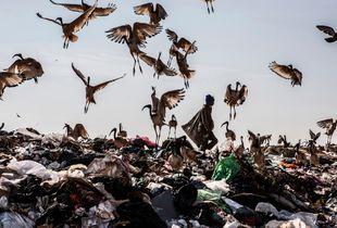 Waste Picker