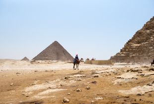 Camels and pyramids in the desert